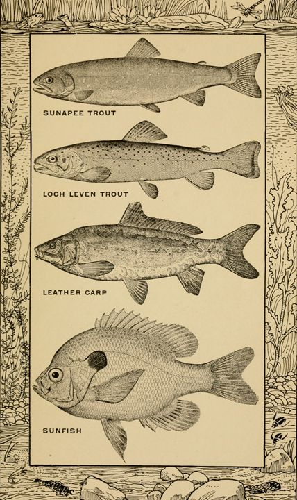 Common Fish - paintings