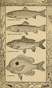 Common Fish