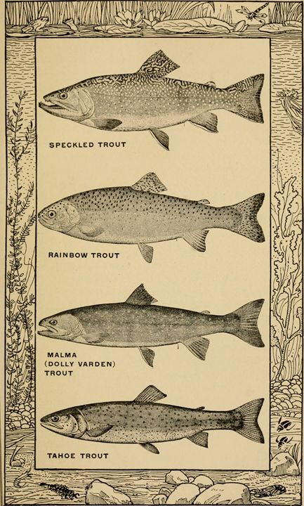 Types of Trout - paintings