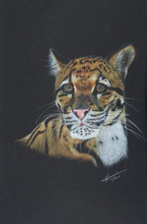 Clouded Leopard - Hannia Smith