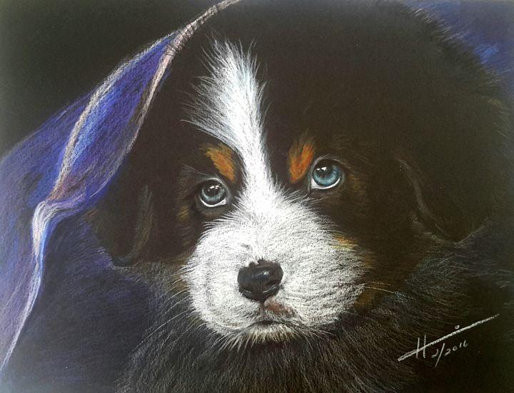 Bernese Mountain Puppy - Hannia Smith