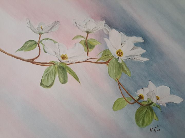 Dogwood blossoms - Hannia Smith