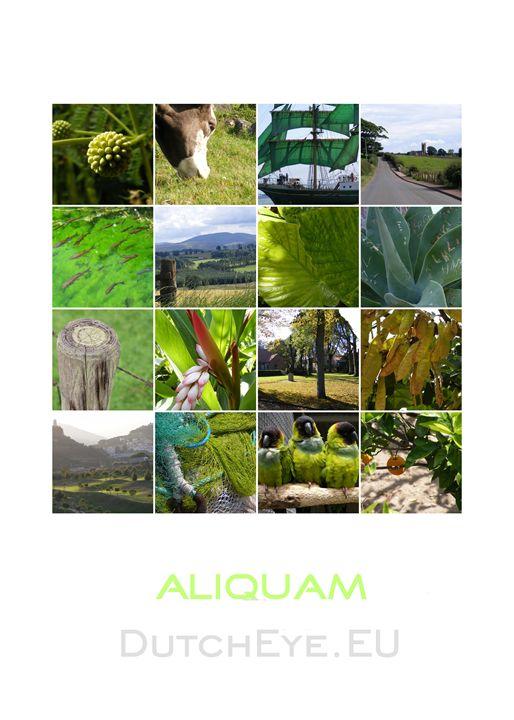 Aliquam - W - DutchEye.EU