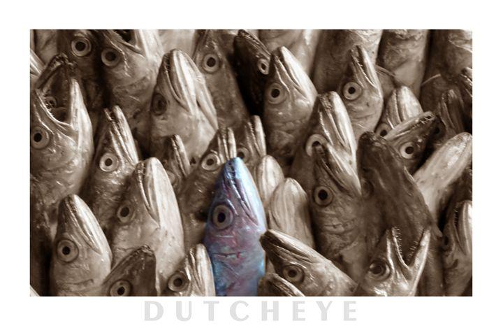 Blue fish - DutchEye.EU