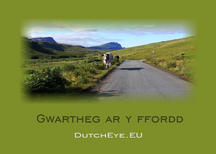 Gwartheg ar y ffordd - G - DutchEye.EU
