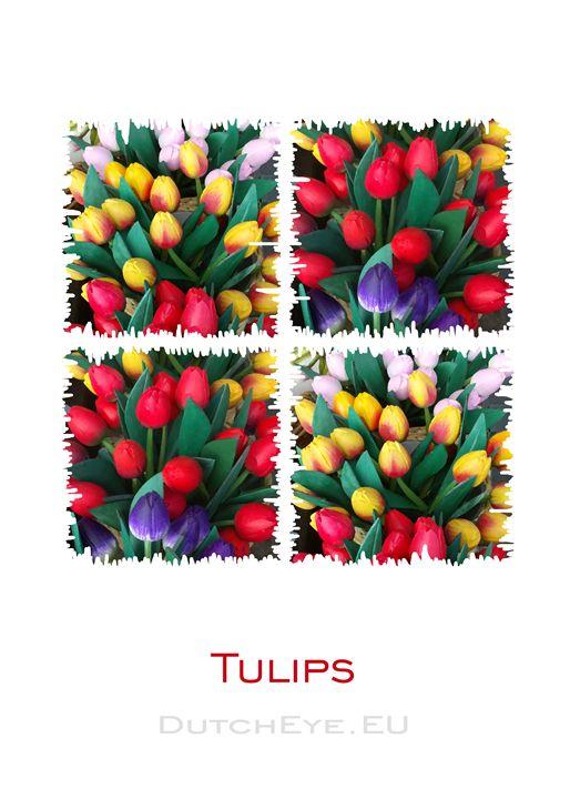 Tulips - W - DutchEye.EU