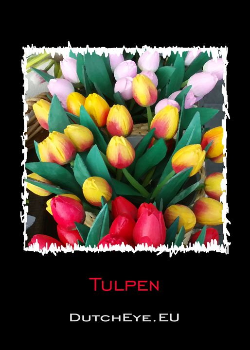 Tulpen - Z - DutchEye.EU