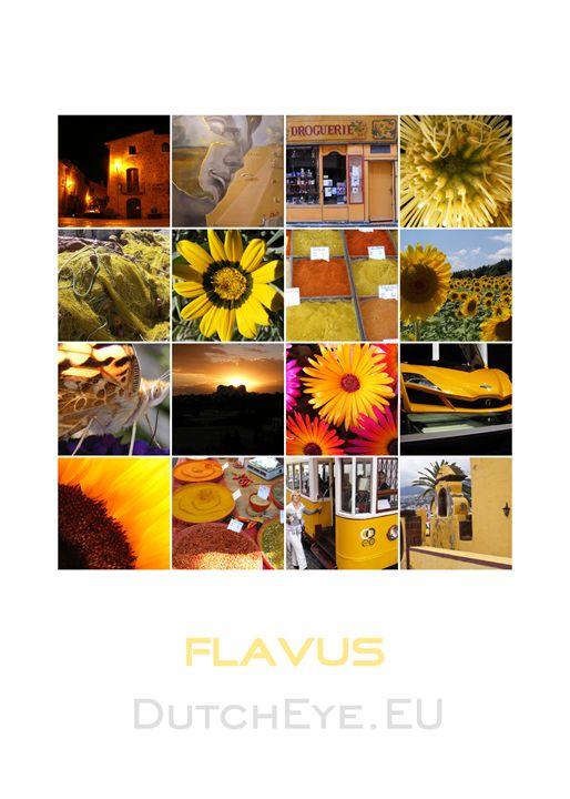 Flavus - Y - DutchEye.EU