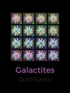 Galactites - B