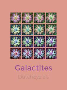 Galactites - O
