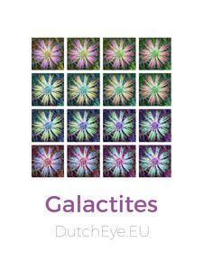 Galactites - W