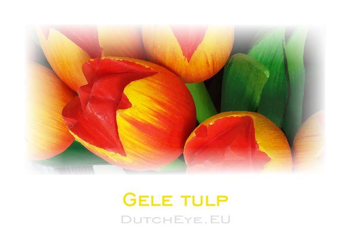 Gele tulp - W - DutchEye.EU