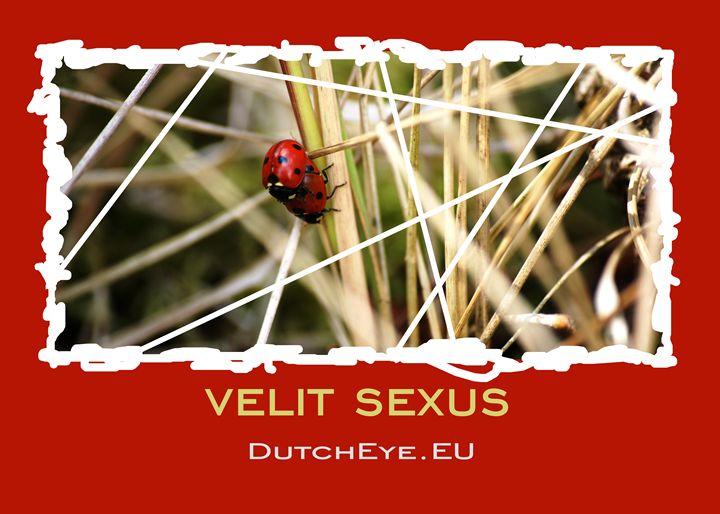 Velit sexus - R - DutchEye.EU
