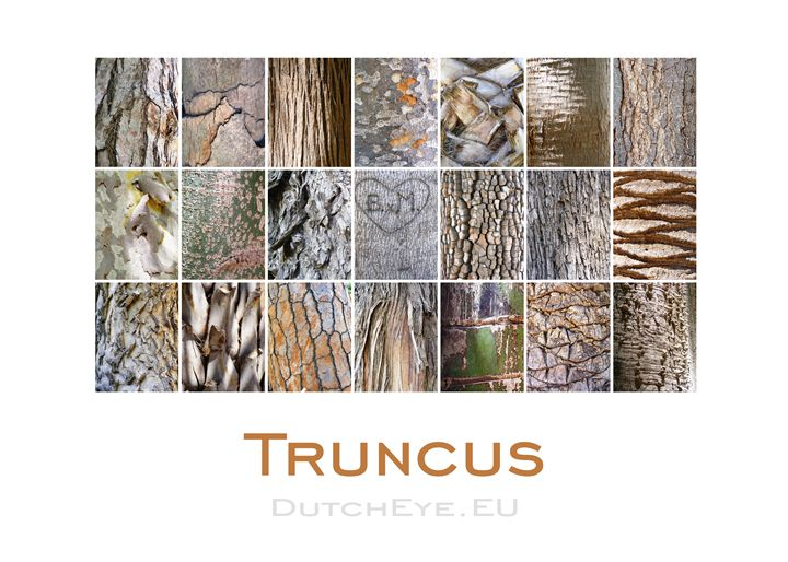 Truncus - W - DutchEye.EU