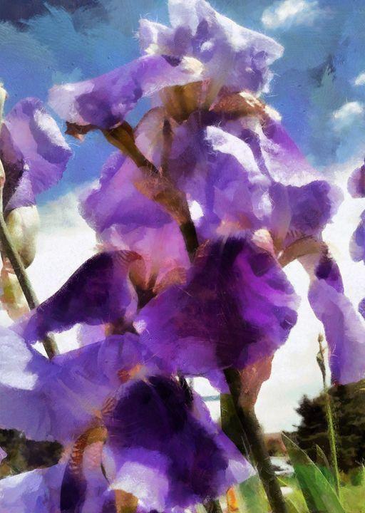 Beautiful Iris - Lelia DeMello