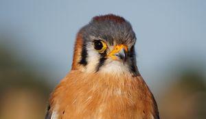 Little Bird - Photosyndipity