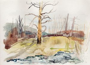 Trees, river