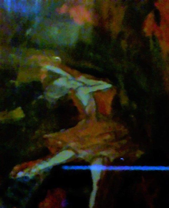 The devils dancer - ely's work