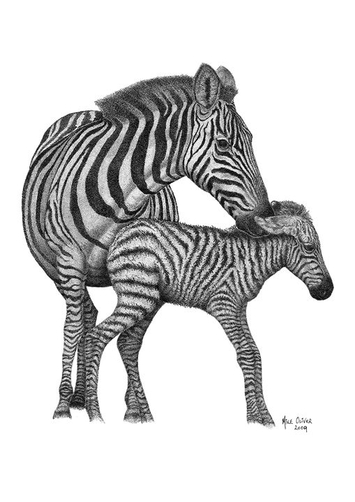 Zebra Pointillism Drawing - Mike Oliver Pointallism