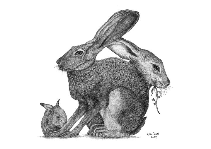stippling drawing rabbits mike oliver pointallism drawings