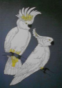 australian selfcrested cockatoos