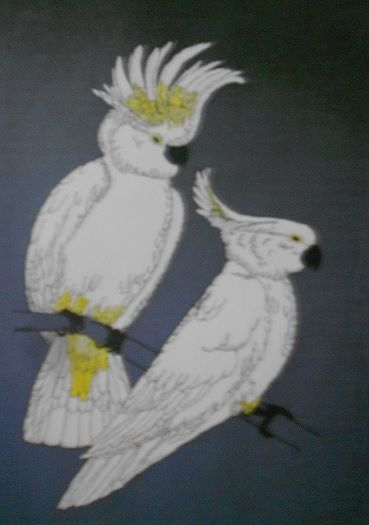 australian selfcrested cockatoos - compu art