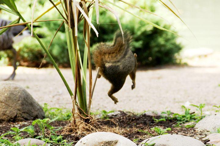 Excited squirrel - Hot Natured
