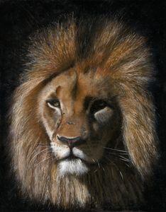 Lion - Kensley Fohn