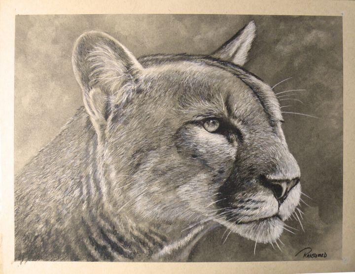 Cougar - Ransumed Fine Art