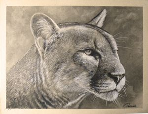 Cougar - Ransumed Fine Art