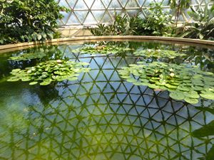 botanical reflection - Essence of me