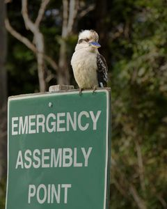 Kookaburra assembly point