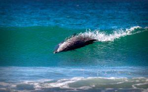 Dolhin surf #3