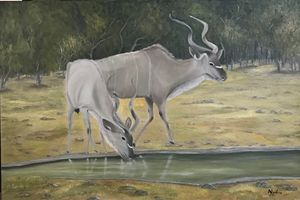 Kudus at a waterhole