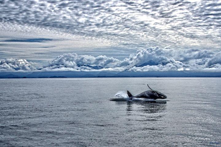 Calf Breach - John Dauer Photography