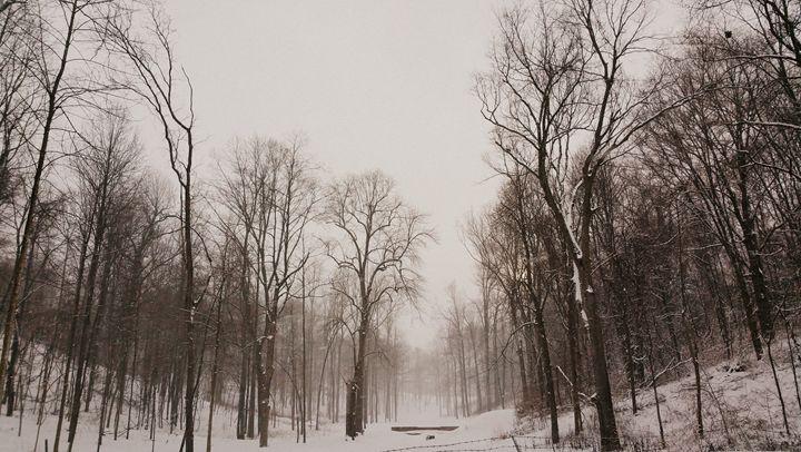 Winter Solitude II - Paul Szakacs
