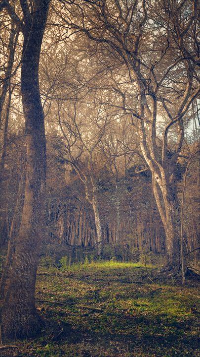 The Secret Forest - Paul Szakacs