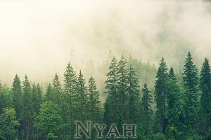 nyah.woods1