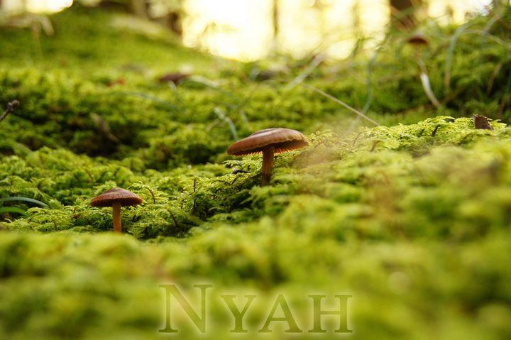 nyah.woods2 - Nyah