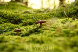 nyah.woods2