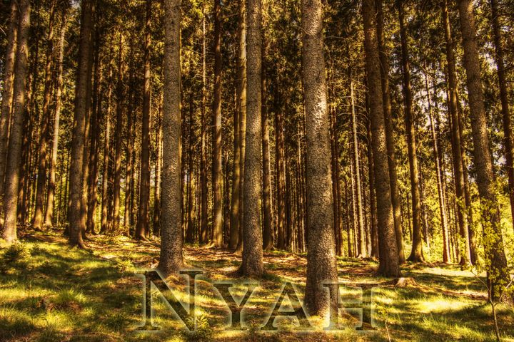 nyah.woods4 - Nyah