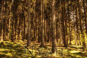 nyah.woods4