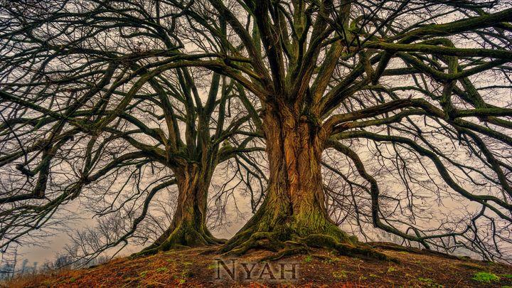 nyah.woods5 - Nyah