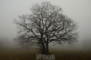 nyah.woods6
