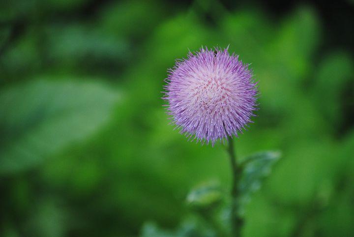 Purple - Nature & Animals