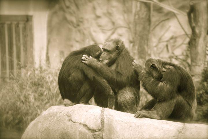 Comforting Monkey - Nature & Animals