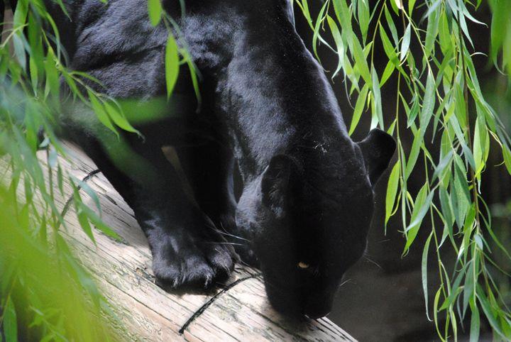 Bagheera - Nature & Animals