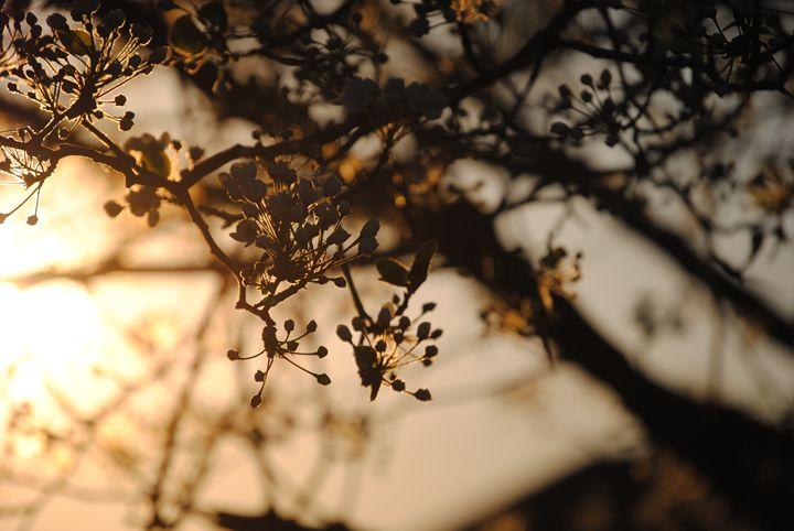 Sunset - Nature & Animals