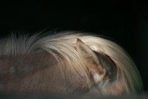 Horse's ears