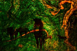 FOREST HORSE 3D ABSTRACT ART